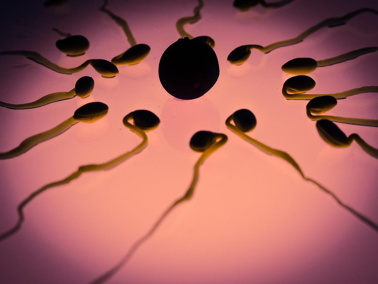 A spermakép javítható, de a javulás nem minden esetben lesz tartós